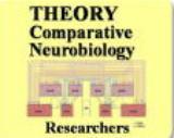 Brain Invertebrates | RM.