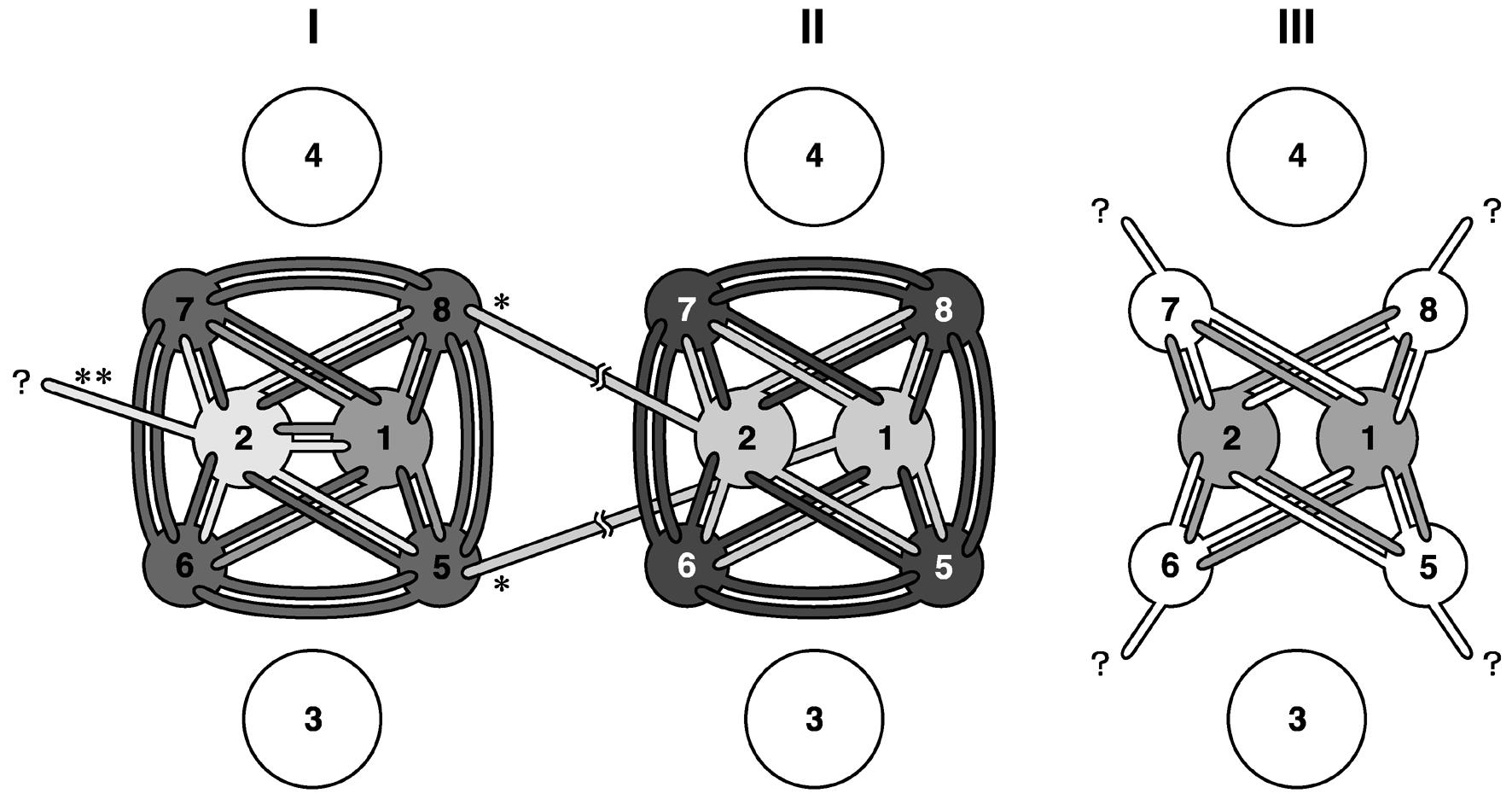 カートリッジ視細胞間接続概略図.png