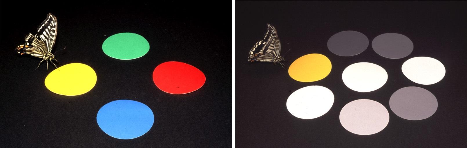 butterfly_behavior1.jpg