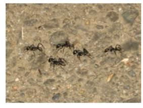 ant_behavior2.jpg